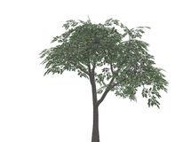 Tree. With leaves (completely isolated on a white background Stock Illustration