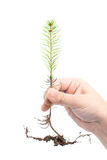 Tree. A tree in hand, isolated Royalty Free Stock Photo