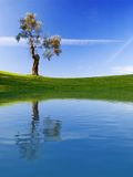 Tree. In golf field with deep blue sky, with lake reflection Stock Photo