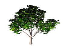 Tree. Alone tree - 3d model over white background Stock Photos