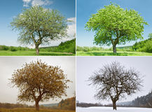 Tree Stock Photos