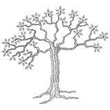 Tree. With leaves in black and white, ink style Royalty Free Stock Images