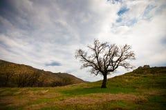 Free Tree Stock Photo - 19594820