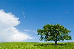 Tree 2. Summer. A lonely tree. Foothills. Before a rain.Wind Royalty Free Stock Photos