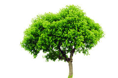 Tree Stock Image