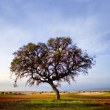 Tree. Isolated on colorful field Stock Photography