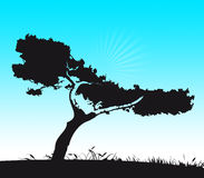 tree stock illustrationer