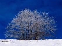 tree Arkivbilder