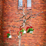 Tree. Pots with flowers on a dry tree about a brick wall royalty free stock image
