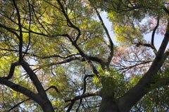 Tree. Stock Photo