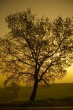 The tree. A tree against the sun royalty free stock photography