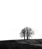 Tree. Black tree on the white background Stock Image