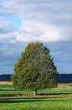 Tree stock image