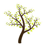Tree. Isolated tree vector with green leafs on summer season