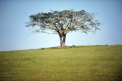 Tree. A single tree on small hill stock photo