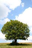 A tree Royalty Free Stock Photos