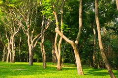 Tree. In the park of thailand stock images