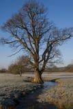 The tree. Stock Photos