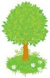 Tree. Vector clip-art illustration of a green foliage tree Royalty Free Stock Photos