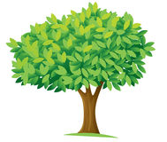 Tree. Illustration of a tree on a white background Stock Photo