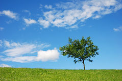 Tree. Lonely tree on meadow against cloudy sky Stock Image