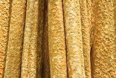 Tree. A yellow Tree bark texture royalty free stock photo