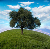 The tree Royalty Free Stock Photo