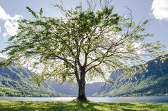 Tree. One tree in the middle of sunny landscape stock image