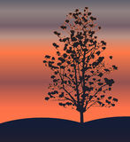 Tree. The silhouette of a tree in the rays of dawn sun. The vector illustration Stock Photo