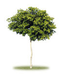 Tree. Scenic green tree nature concept Royalty Free Stock Images