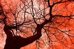 Tree. And sky Stock Photo