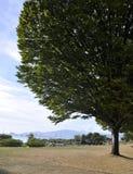 The tree Royalty Free Stock Photo