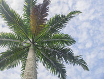 Tree. Nice view of tropical tree forest isolated blue skies Royalty Free Stock Photo