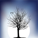 Tree. Two birds on a tree in night Stock Images