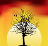 Tree. Two birds on a tree in night Royalty Free Stock Images