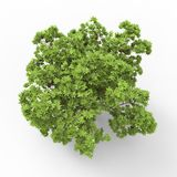 Tree. This is a 3d illustration of a tree Stock Photo