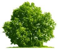 Tree Stock Photos