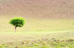 Single tree. The single tree in the deserts royalty free stock photography
