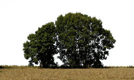 Tree 3. Isolated tree on a field Royalty Free Stock Photography