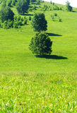 Trees in prairie,Hebei China Stock Photo