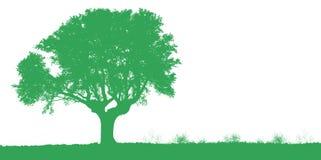 Free Tree Stock Photos - 3356073