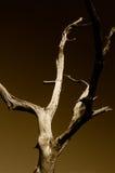tree Arkivbild