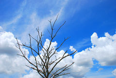 Tree. The dead tree and clear blue sky royalty free stock images