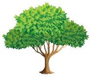 Free Tree Stock Image - 44515601
