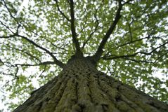 Tree. View of a tree by trunk royalty free stock photos
