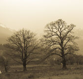 Tree. Landscape, two trees in mountain background Stock Images