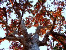 tree Royalty Free Stock Photography