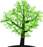 Tree. There is tree with green leaves Stock Photo