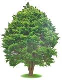 tree Royaltyfria Foton