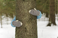 Tree1 Stockbilder